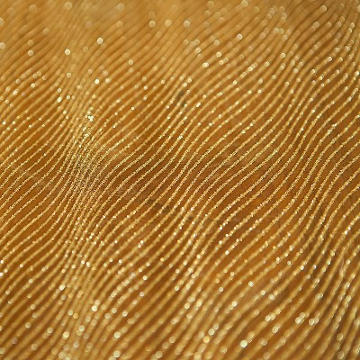 BIEŻNIK/organza złota Fale 50cmx10m